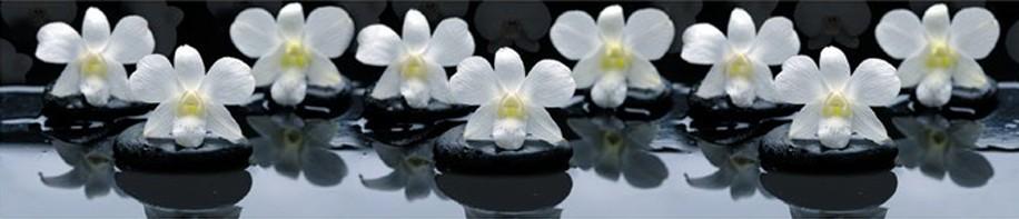 Стеновая панель (Скинали) для кухни - Орхидея на камнях