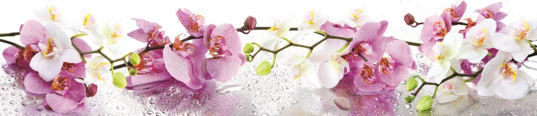 Стеновая панель (Скинали) для кухни - Орхидея 2