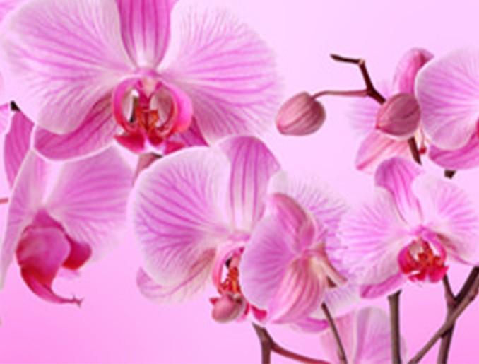 Стеновая панель (Скинали) для кухни - Орхидея 3